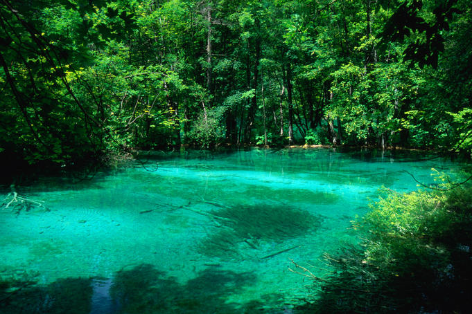 An emerald green pool surrounded by forest in the Plitvice Lakes National Park.