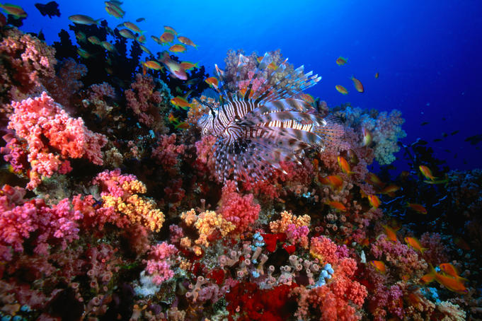 Soft corals and tropical fish at H.P. Reef.