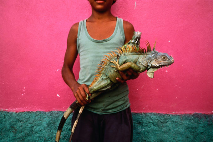 Young boy holding an endangered iguana. His poverty may lead him to sell it as food - Kilometro Treinta.