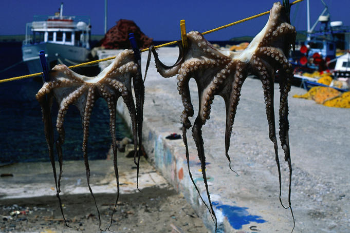 Octopus hanging in the harbour to dry - Lesvos