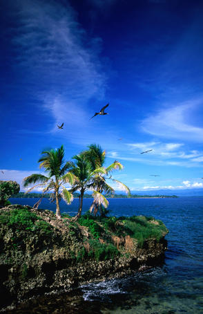 Birds flying over palm trees at Swan key, marine bird sanctuary in the Bocas del Toro Islands.