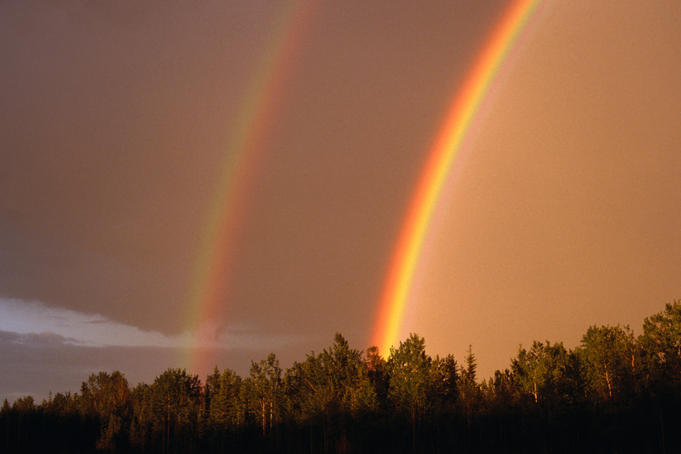 Rainbows over trees.