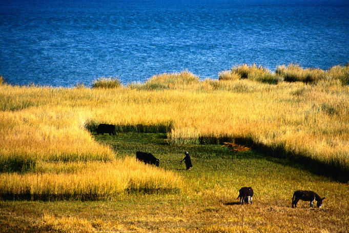 Farming along the eastern shore of Lake Titicaca - La Paz
