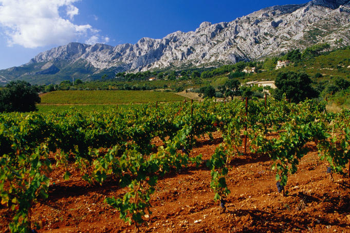 Vineyards beneath Sainte Victoire mountain in Provence.