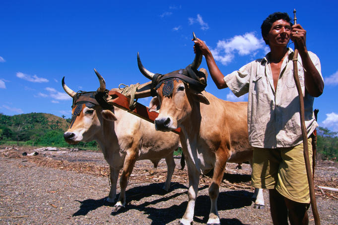 A famer and his ox and cart toil the fields in Playa Camaronal.
