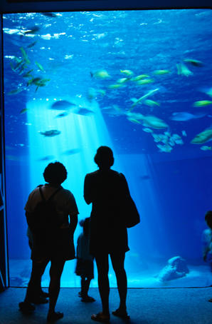 Visitors to the Maui Ocean Center silhouetted against the big reef tank. The state-of-the-art facility is the largest tropical aquarium in the United States.