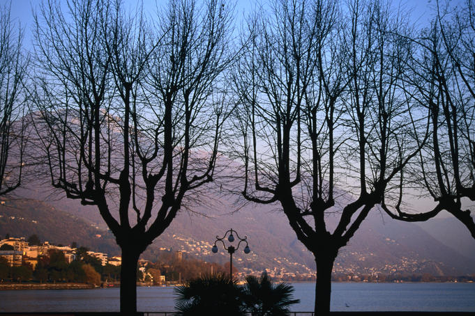 Bare trees in front of Locarno and Lake Maggiore at dusk.