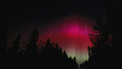 Silhouetted forest with aurora borealis