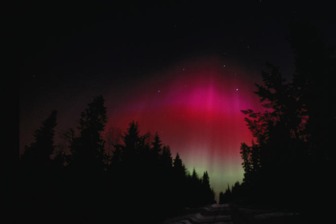 Aurora Borealis (Northern Lights) colours the night sky through a silhouetted forest.