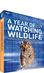 A Year of Wildlife Watching