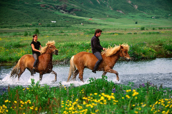 People riding Icelandic ponies across a stream.